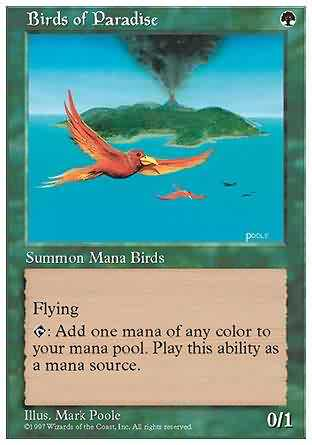 Birds of Paradise - Revised